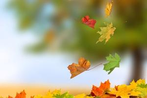 October Prayer Reflection 2019